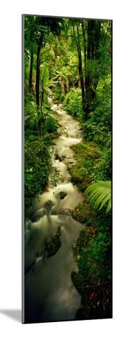 Creek Flowing Through a Rainforest, North of Hilo, Big Island, Hawaii, Usa--Mounted Photographic Print