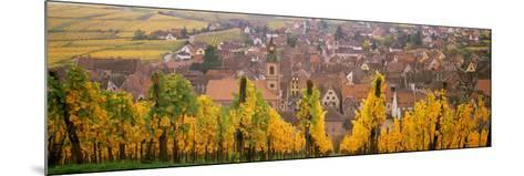 Elevated View of the Riquewihr and Vineyards in Autumn, Alsace, France--Mounted Photographic Print