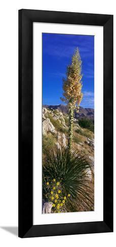 Tree at Anza Borrego Desert State Park, Borrego Springs, California, Usa--Framed Art Print
