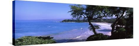 Trees on the Beach, Mauna Kea, Hawaii, Usa--Stretched Canvas Print