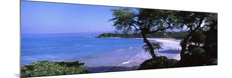 Trees on the Beach, Mauna Kea, Hawaii, Usa--Mounted Photographic Print