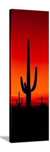 Silhouette of Saguaro Cactus at Sunset, Arizona, Usa--Stretched Canvas Print