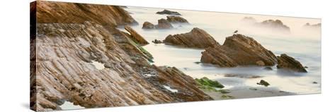 Seagull Perching on the Beach, Gaviota, Santa Barbara County, California, Usa--Stretched Canvas Print