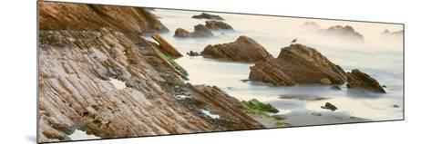 Seagull Perching on the Beach, Gaviota, Santa Barbara County, California, Usa--Mounted Photographic Print