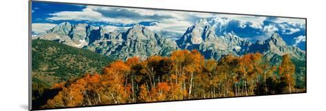 Aspen Trees in a Forest, Teton Range, Grand Teton National Park, Wyoming, Usa--Mounted Photographic Print