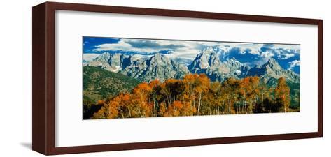 Aspen Trees in a Forest, Teton Range, Grand Teton National Park, Wyoming, Usa--Framed Art Print