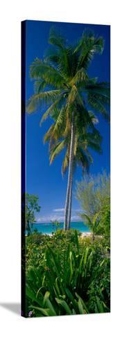 Palm Tree and Plants on the Beach, Cat Island, Bahamas--Stretched Canvas Print