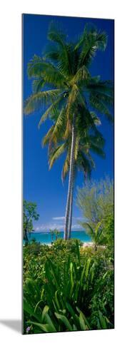 Palm Tree and Plants on the Beach, Cat Island, Bahamas--Mounted Photographic Print