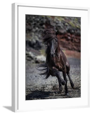 Icelandic Black Stallion, Iceland--Framed Art Print