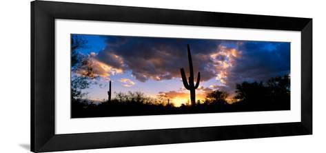 Saguaro Cactus, Sunset, Tucson--Framed Art Print