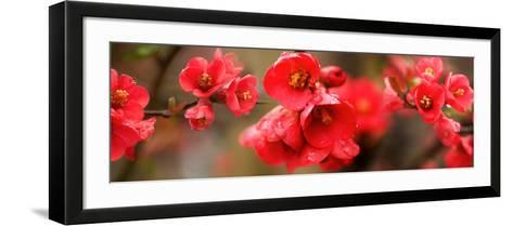Close-Up of Red Flowers in Bloom--Framed Art Print