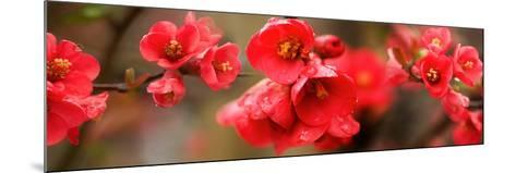 Close-Up of Red Flowers in Bloom--Mounted Photographic Print