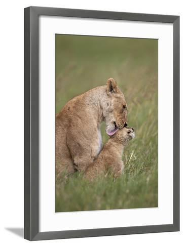 Lion (Panthera Leo) Female Grooming a Cub, Ngorongoro Crater, Tanzania, East Africa, Africa-James Hager-Framed Art Print