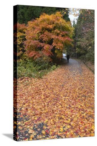 Autumn Leaves Along the Old Nakasendo Highway, Magome, Kiso Valley Nakasendo, Central Honshu, Japan-Stuart Black-Stretched Canvas Print
