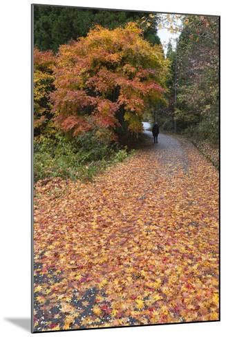Autumn Leaves Along the Old Nakasendo Highway, Magome, Kiso Valley Nakasendo, Central Honshu, Japan-Stuart Black-Mounted Photographic Print