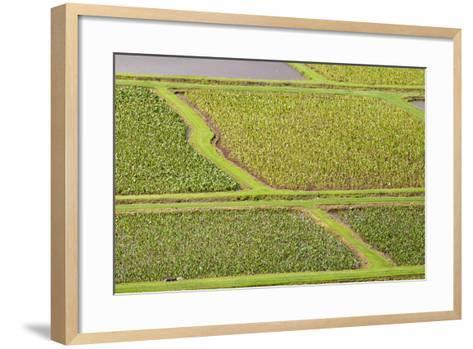 Taro Fields in Hanalei National Wildlife Refuge-Michael DeFreitas-Framed Art Print