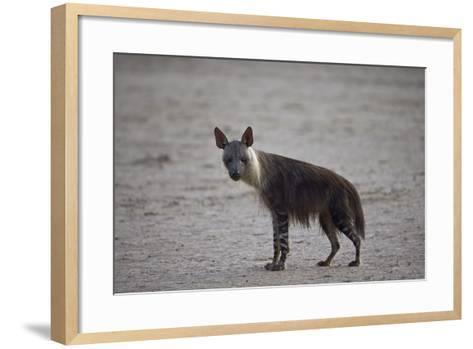 Brown Hyena (Hyaena Brunnea) (Formerly Parahyaena Brunnea)-James Hager-Framed Art Print
