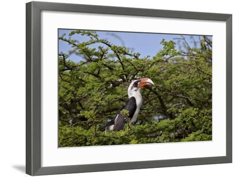 Von Der Decken's Hornbill (Tockus Deckeni)-James Hager-Framed Art Print