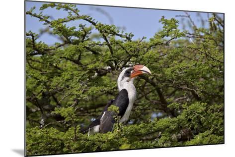 Von Der Decken's Hornbill (Tockus Deckeni)-James Hager-Mounted Photographic Print