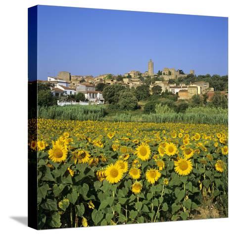 Hilltop Village Above Sunflower Field, Pals, Catalunya (Costa Brava), Spain-Stuart Black-Stretched Canvas Print