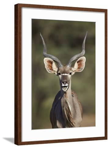 Greater Kudu (Tragelaphus Strepsiceros) Buck with His Mouth Open-James Hager-Framed Art Print