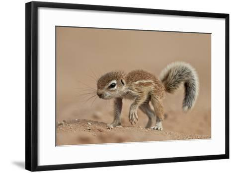 Baby Cape Ground Squirrel (Xerus Inauris)-James Hager-Framed Art Print