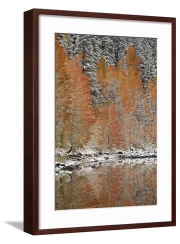 Orange Aspens in the Fall Among Evergreens Covered with Snow at a Lake-James Hager-Framed Art Print