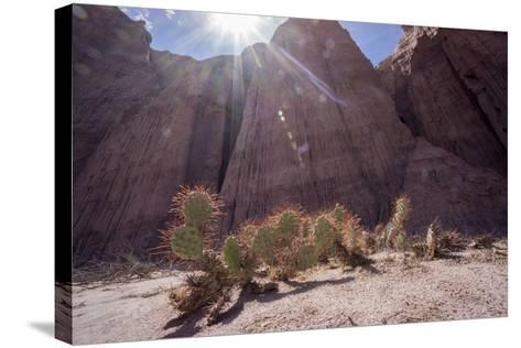 Los Colorados, Salta Region, Argentina-Peter Groenendijk-Stretched Canvas Print