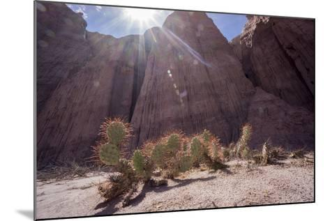 Los Colorados, Salta Region, Argentina-Peter Groenendijk-Mounted Photographic Print