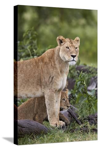 Lion (Panthera Leo) Female and Cub, Ngorongoro Crater, Tanzania, East Africa, Africa-James Hager-Stretched Canvas Print
