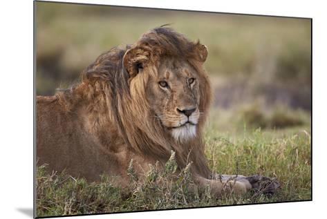 Lion (Panthera Leo), Serengeti National Park, Tanzania, East Africa, Africa-James Hager-Mounted Photographic Print