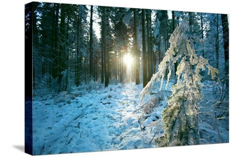 The Sun Finding a Small Opening in the Snowy Forest of Koenigstuhl-Andreas Brandl-Stretched Canvas Print