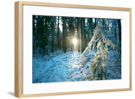 The Sun Finding a Small Opening in the Snowy Forest of Koenigstuhl-Andreas Brandl-Framed Art Print