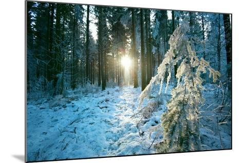 The Sun Finding a Small Opening in the Snowy Forest of Koenigstuhl-Andreas Brandl-Mounted Photographic Print