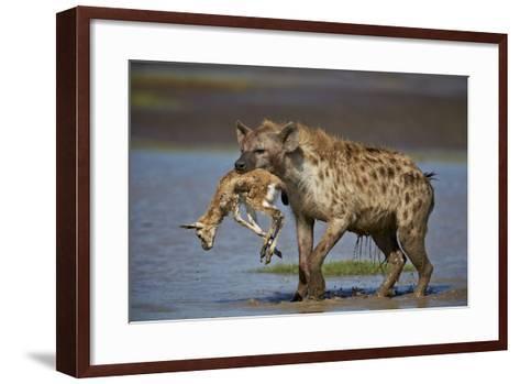 Spotted Hyena (Spotted Hyaena) (Crocuta Crocuta) with a Baby Thomson's Gazelle (Gazella Thomsonii)-James Hager-Framed Art Print