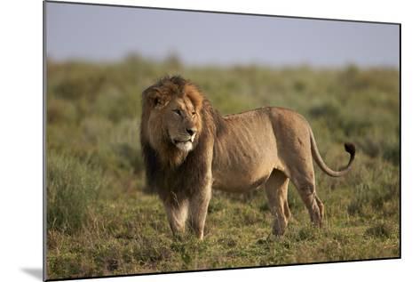 Lion (Panthera Leo), Serengeti National Park, Tanzania, East Africa, Africa-James Hager-Mounted Photographic Print