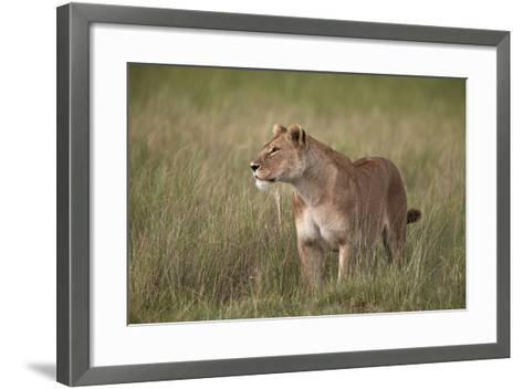 Lion (Panthera Leo) Female (Lioness) in Tall Grass-James Hager-Framed Art Print