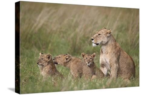 Lion (Panthera Leo) Female and Three Cubs, Ngorongoro Crater, Tanzania, East Africa, Africa-James Hager-Stretched Canvas Print