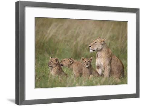 Lion (Panthera Leo) Female and Three Cubs, Ngorongoro Crater, Tanzania, East Africa, Africa-James Hager-Framed Art Print