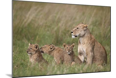 Lion (Panthera Leo) Female and Three Cubs, Ngorongoro Crater, Tanzania, East Africa, Africa-James Hager-Mounted Photographic Print