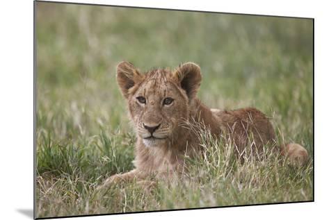 Lion (Panthera Leo) Cubs, Ngorongoro Crater, Tanzania, East Africa, Africa-James Hager-Mounted Photographic Print