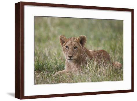 Lion (Panthera Leo) Cubs, Ngorongoro Crater, Tanzania, East Africa, Africa-James Hager-Framed Art Print