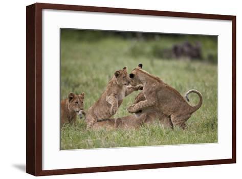 Lion (Panthera Leo) Cubs Playing, Ngorongoro Crater, Tanzania, East Africa, Africa-James Hager-Framed Art Print