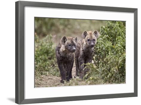 Two Spotted Hyena (Spotted Hyaena) (Crocuta Crocuta) Pups-James Hager-Framed Art Print