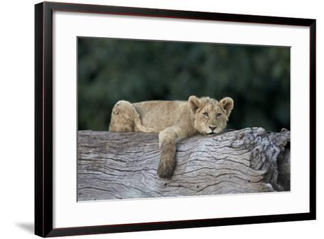 Lion (Panthera Leo) Cub on a Downed Tree Trunk, Ngorongoro Crater, Tanzania, East Africa, Africa-James Hager-Framed Art Print