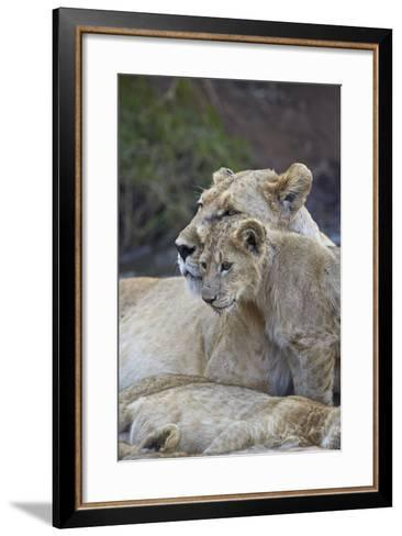 Lion (Panthera Leo) Female and Cub, Ngorongoro Crater, Tanzania, East Africa, Africa-James Hager-Framed Art Print