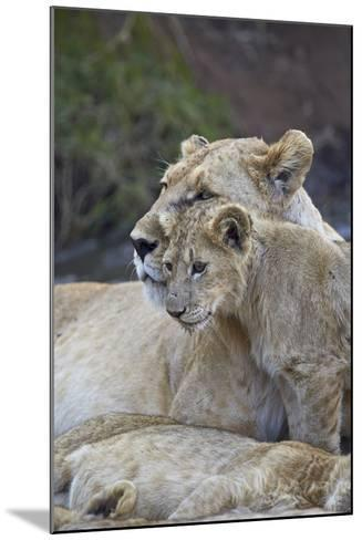 Lion (Panthera Leo) Female and Cub, Ngorongoro Crater, Tanzania, East Africa, Africa-James Hager-Mounted Photographic Print