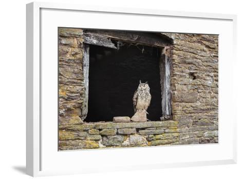 Indian Eagle Owl (Bubo Bengalensis), Herefordshire, England, United Kingdom-Janette Hill-Framed Art Print