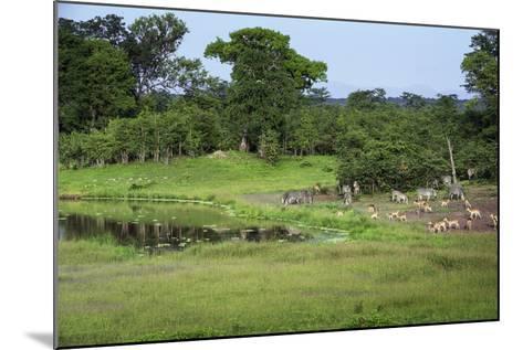 Zebra and Impala at Waterhole, South Luangwa National Park, Zambia, Africa-Janette Hill-Mounted Photographic Print