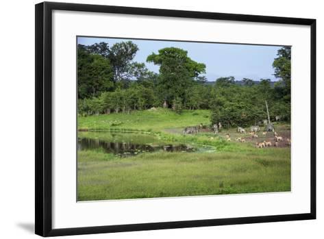 Zebra and Impala at Waterhole, South Luangwa National Park, Zambia, Africa-Janette Hill-Framed Art Print